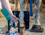 Veterinary & Agriculture Photography - Sclater Vets X Raying the inside of the horses foot