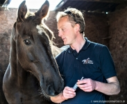 Veterinary & Agriculture Photography - Sclater Equine Vet preparing to give horse an injection